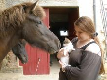 Icelandic horses and kitten